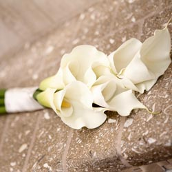 Five Large Calla Lily Hand Tied Bouquet