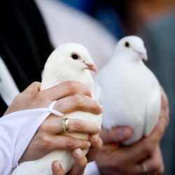 Memorable 10 Dove Release for Las Vegas Wedding